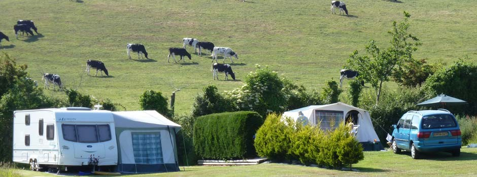 caravan and tent set up on pitches 18 and 19 with cows in the field behind