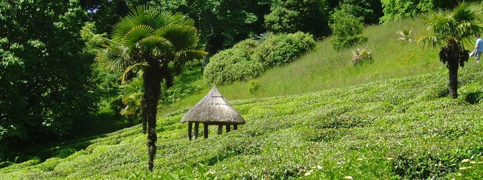 Glendurgan garden near Falmouth