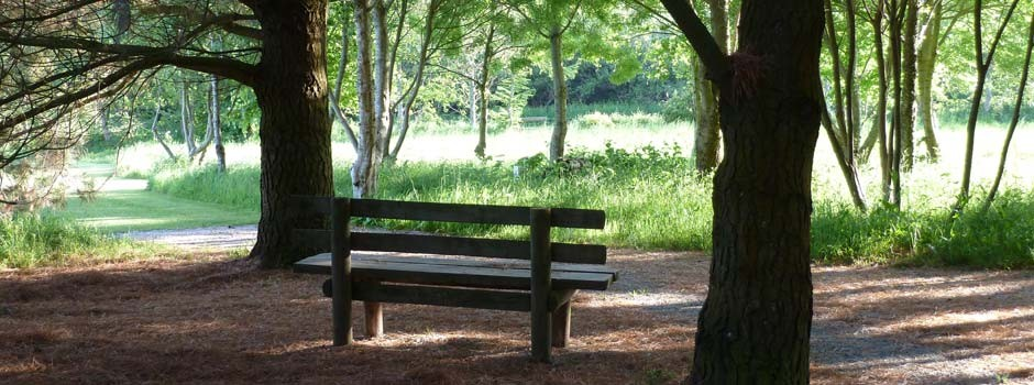 wooden seat in the dog and nature walk