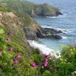 enjoy coastal walks