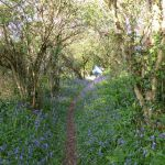 footpath to Portscatho