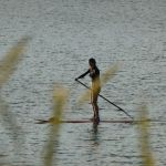 have a go at paddle-boarding