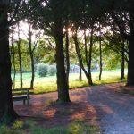 dog and nature walk