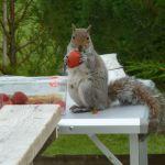 cheeky squirrel!